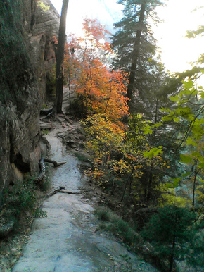 Autumn_path_zion_by_toastforbrekkie